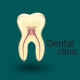 Emblema humano del diente stock de ilustración