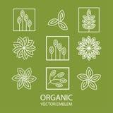 Emblema orgánico abstracto determinado del vector, monograma del esquema, símbolo de la flor Imagen de archivo libre de regalías
