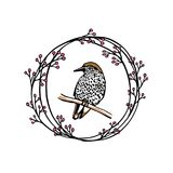 Emblema tirado mão do pássaro Imagem de Stock