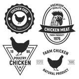 Emblemas da galinha do vintage, etiquetas Logotipos da galinha com textura do grunge Ilustração do vetor ilustração do vetor