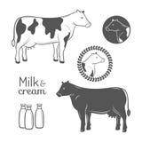 Emblemas da vaca ajustados Imagens de Stock