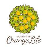 emblemat organicznie Logo dla gospodarstwa rolnego, organicznie, życzliwi produkty, Obraz Stock