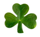 Emblematic Shamrock Stock Photo