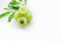 Emblica, πράσινα φρούτα amla Στοκ Φωτογραφία