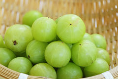 Emblica,amla green fruits Stock Photography