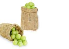 Emblica, fruits verts d'amla Photos stock