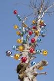 Emboîtement d'oiseau sur un arbre Photographie stock