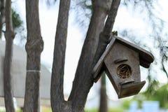 Emboîtement d'oiseau sur un arbre Images stock