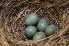 Emboîtement d'oiseaux Photos libres de droits