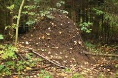 Emboîtement de fourmi photographie stock libre de droits