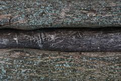 Embossed texture of the bark of a tree with moss on it. Wood tree texture pattern wallpaper. Ecology concept background royalty free stock image
