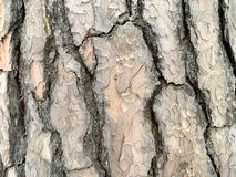 Rough bark of a gray tree. stock illustration