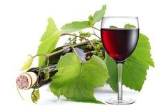 Embotelle entrelazado con la vid y el vidrio de vino Foto de archivo libre de regalías