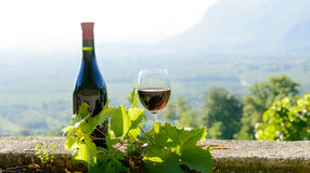 Embotelle y un vidrio de vino rojo, en fondo del viñedo Fotos de archivo libres de regalías