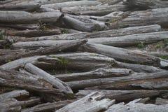 Embouteillage de bois de flottage à la plage Images stock