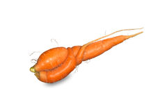 Embrace of love two carrots on white. Background Royalty Free Stock Image