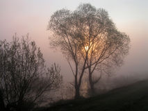 The embraced trees. Earlier, foggy morning near lake stock photo