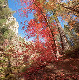Embracement. From nature, in West Fork Oak Creek Canyon Royalty Free Stock Images