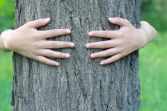 Embracing a tree Stock Photography