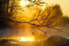 Embranchez-vous à la lumière du soleil d'hiver Image stock