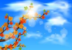 Embranchez-vous avec Autumn Maple Leaves illustration stock