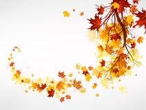 Embranchez-vous avec des feuilles d'érable Photos stock