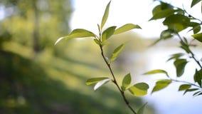 Embranchez-vous avec des feuilles dans le vent Photographie stock libre de droits
