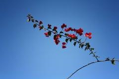 Embranchez-vous avec des fleurs Photo libre de droits