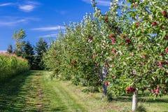 embranchez-vous avec des fruits Photographie stock libre de droits