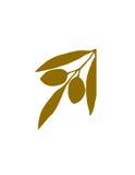Embranchez-vous avec des olives Images libres de droits