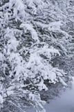 Embranchez-vous avec la neige Images stock