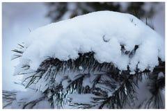 Embranchez-vous avec la neige Photographie stock