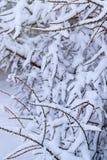 Embranchez-vous avec la neige Photos libres de droits