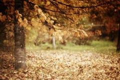 Embranchez-vous avec le paysage jaune d'autmn de feuilles Image libre de droits