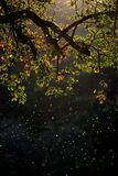 Embranchez-vous avec les feuilles et les moustiques coloful dans le coucher du soleil photographie stock libre de droits
