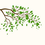 Embranchez-vous avec les feuilles vertes Images libres de droits