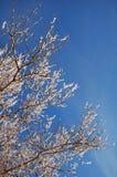 Embranchez-vous dans la neige Image libre de droits