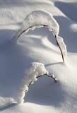 Embranchez-vous dans la neige Photos libres de droits