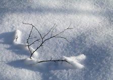 Embranchez-vous dans la neige Images libres de droits