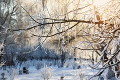 Embranchez-vous dans la neige dans le contre-jour du soleil Images stock