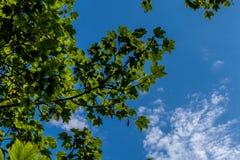 Embranchez-vous dans le ciel Images libres de droits