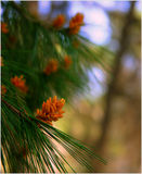 Embranchez-vous dans un bois. Image stock