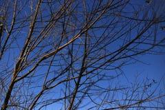 Embranchez-vous en ciel bleu Photo libre de droits