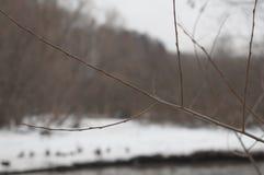 Embranchez-vous en hiver Images stock