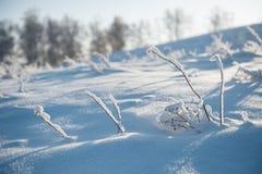 Embranchez-vous sous la chute de neige importante Images libres de droits