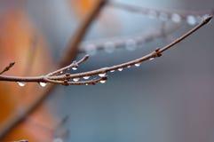 Embranchez-vous sur la pluie Image stock
