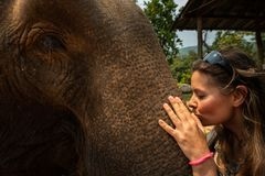 Embrassant la touriste de fille d'éléphant embrasse le tronc d'éléphants photos libres de droits