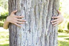 Embrassement de l'arbre centenaire image libre de droits
