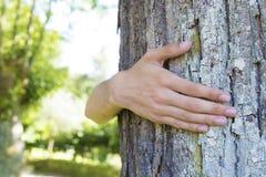 Embrassement de l'arbre centenaire photo stock
