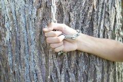 Embrassement de l'arbre centenaire images stock
